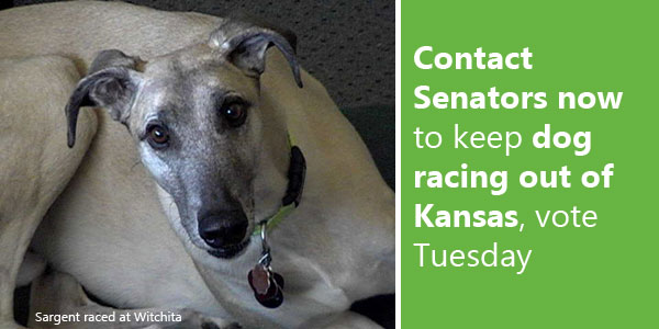 Contact Senators now to keep dog racing out of Kansas, vote Tuesday
