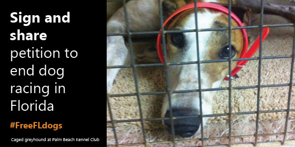 URGENT: Sign and share petition to end dog racing in Florida