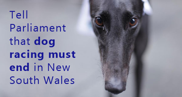 Tell Parliament that dog racing must end in New South Wales