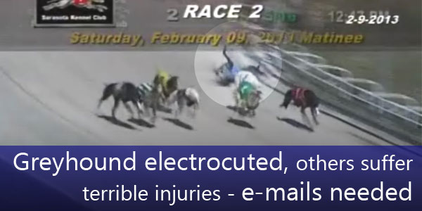 Greyhound electrocuted, others suffer terrible injuries - e-mails needed