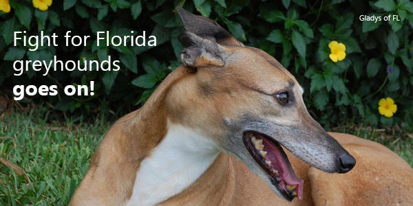Fight for Florida greyhounds goes on!