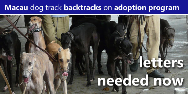 Macau dog track backtracks on an adoption program, letters needed now