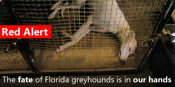 In 10 Minutes You Can Help Save the Lives of Florida Greyhounds