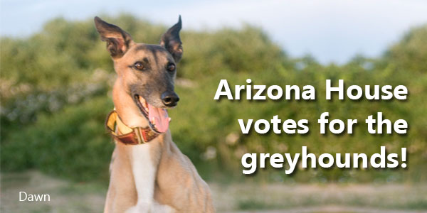Arizona House votes for the greyhounds!