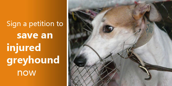 Sign a petition to save an injured greyhound now