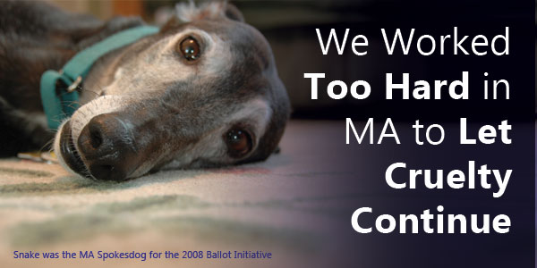 We Worked Too Hard in MA to Let Cruelty Continue