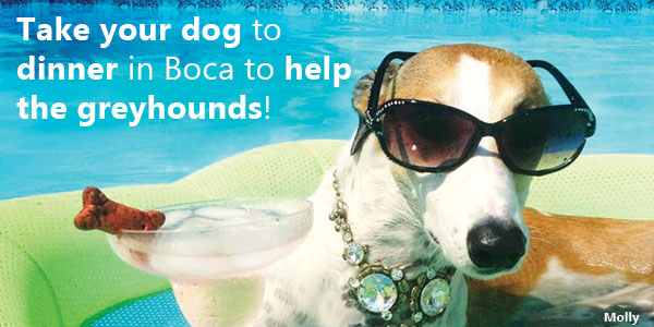 Take your dog to dinner in Boca Raton to help greyhounds