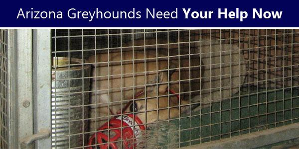 Arizona Greyhounds Need Your Help Now