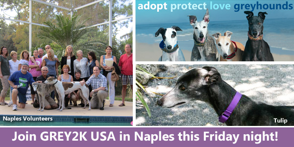 Join GREY2K USA in Naples this Friday night!