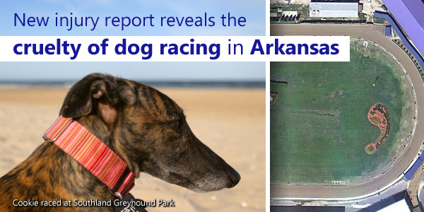 New injury report reveals the cruelty of dog racing in Arkansas
