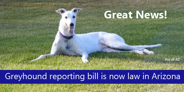 Great News! Greyhound reporting bill is now law in Arizona