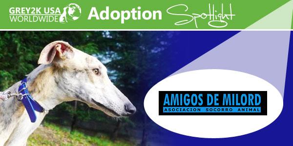 <br> Adoption Spotlight: Amigos de Milord