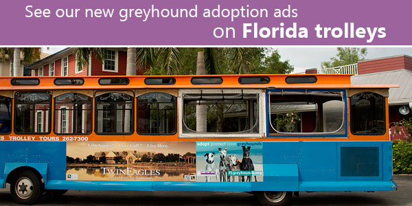 See our new greyhound adoption ads on Florida trolleys