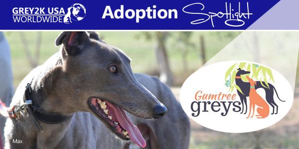 <br> Adoption Spotlight: Friends of the Hound