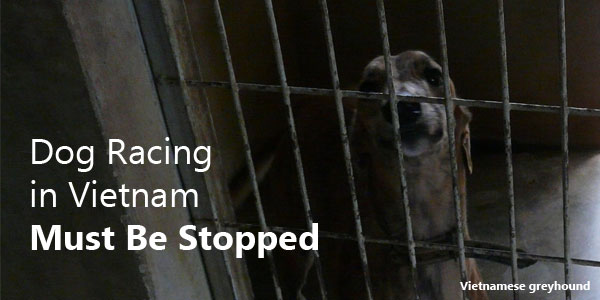 Dog Racing in Vietnam