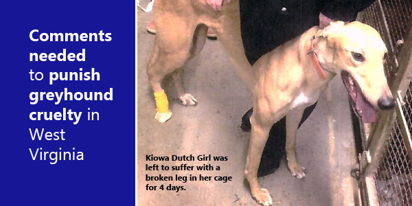 Comments needed to punish cruelty to greyhounds in West Virginia