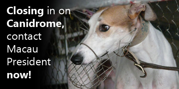 Closing in on Canidrome, contact Macau President now!
