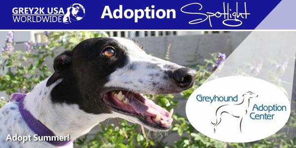 <br> Adoption Spotlight: California's Greyhound Adoption Center