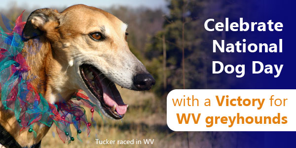 Celebrate National Dog Day with a Victory for WV greyhounds