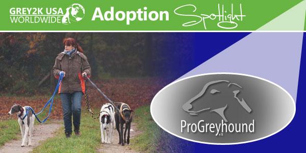 <br> Adoption Spotlight: ProGreyhound