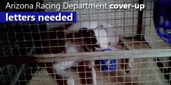 Arizona Racing Department cover-up, letters needed