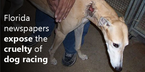 Become a real life action hero for the greyhounds