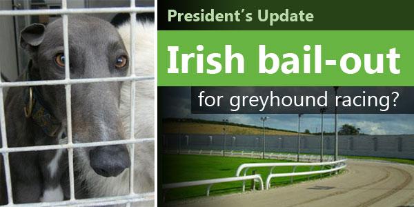 An Irish Bail Out for Greyhound Racing?