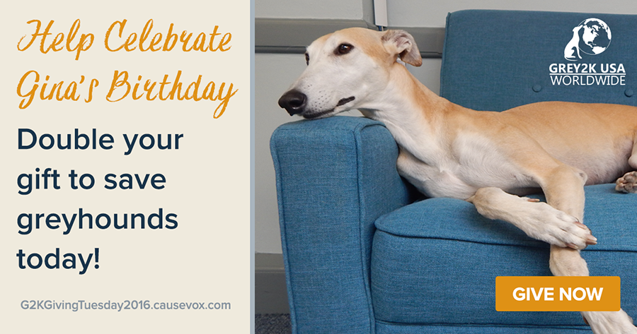 Double your gift to save greyhounds today!