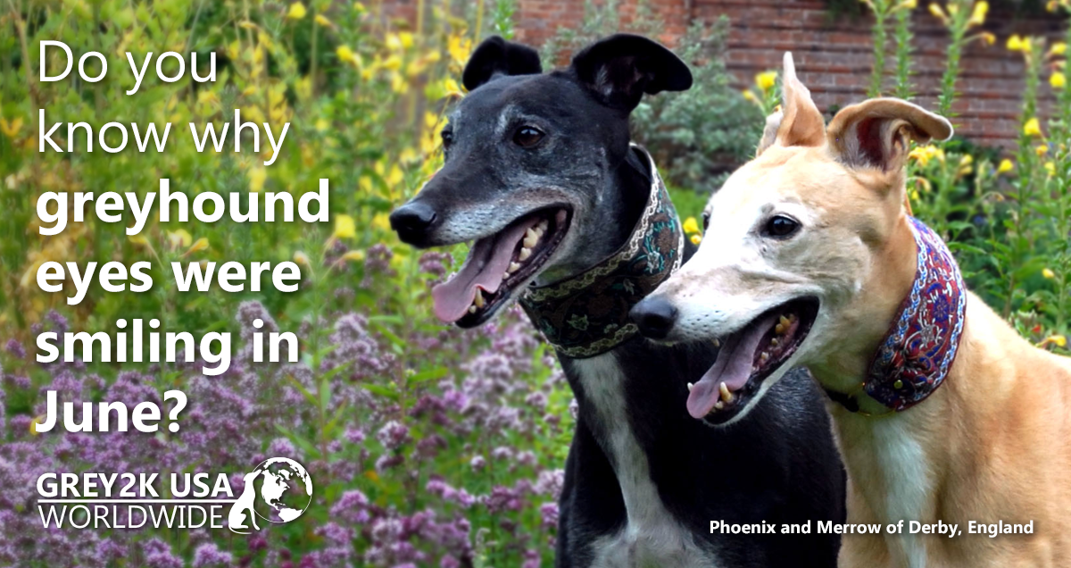 Do you know why greyhound eyes were smiling in June?