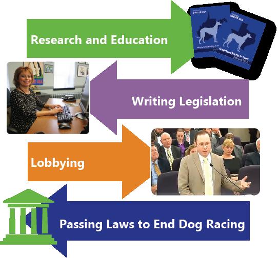 How we help greyhounds