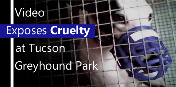 Video Exposes Cruelty at Tucson Greyhound Park