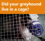 Did your greyhound live in a cage?