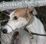 Rescue Brooklyn