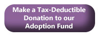 Make a Tax-Deductible Donation to our Adoption Fund