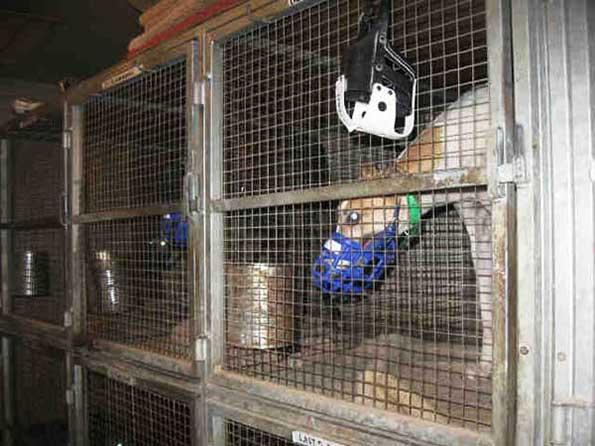 Tucson Greyhound Park kennel