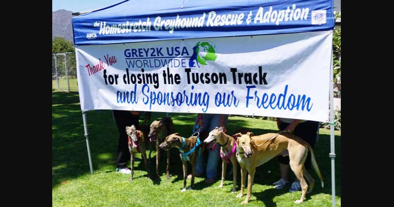 Greyhounds sponsored for adoption by GREY2K USA when racing ended in AZ