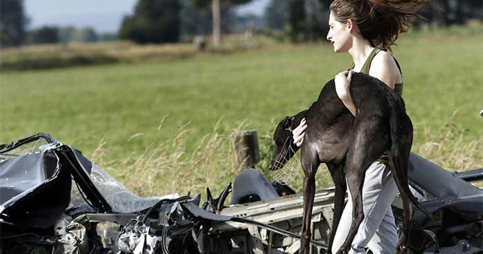A woman carries an injured greyhound after a car and van collided in New Zealand