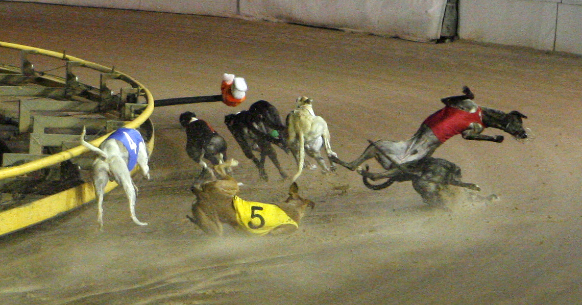 Greyhound Racing Worldwide