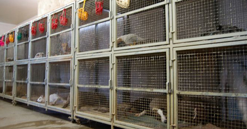 Caged dogs at Southland Greyhound Park in Arkansas