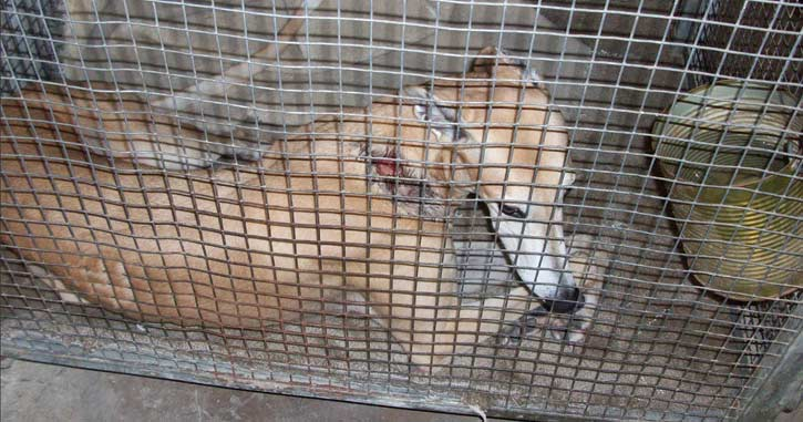 During a kennel inspection in Florida, Dooley the greyhound was found injured