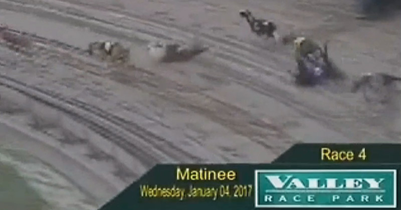 Four greyhounds collide during a race in Texas