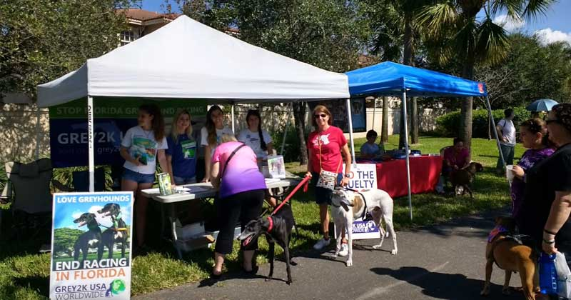 GREY2K USA is represented at Woofstock in Florida.