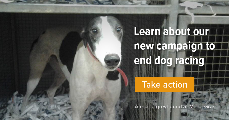 Learn about our new campaign to end dog racing