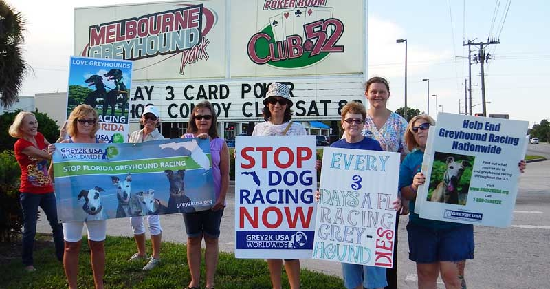 Speaking out for greyhounds who have no voice