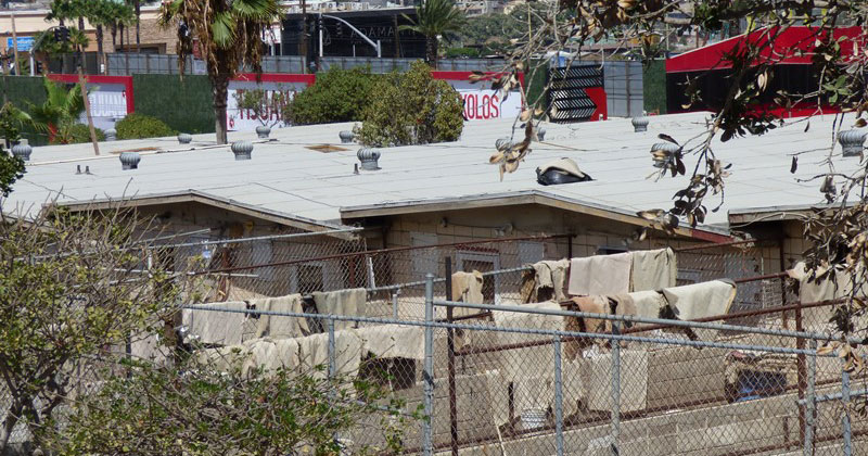 The Agua Caliente racetrack in Tijuana is the last greyhound racing track in Mexico