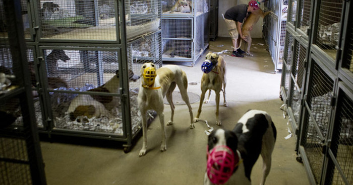The Iowa Greyhound Park kennel compound