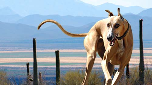 Victory! End the Cruelty at Tucson Greyhound Park