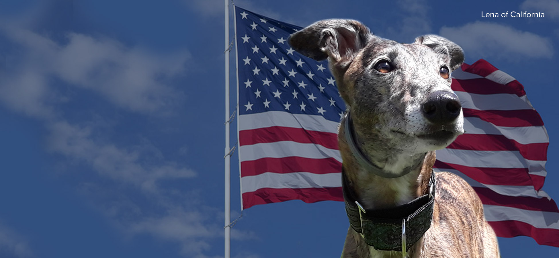 Federal Bill to End Dog Racing in the United States