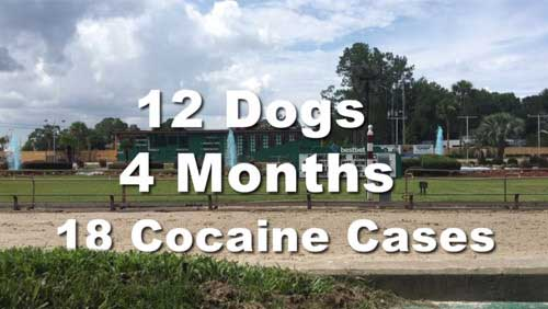 Stop cocaine use in greyhound racing
