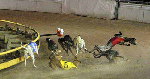 Injuries & Deaths - dogs collide on a track